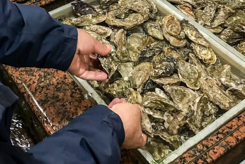 Selezioniamo il pesce migliore